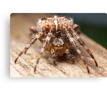 Garden Spider Macro 1 Canvas Print