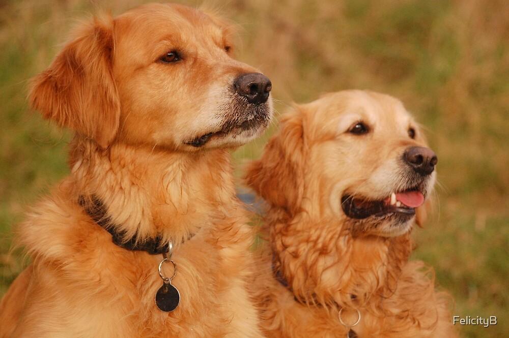 The Golden Couple by FelicityB