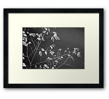 Freeway Leaves Framed Print