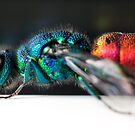 Jeweled Wasp by Carl Reid