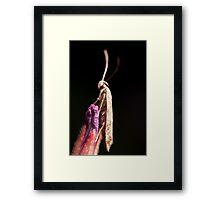 Super Moth Framed Print