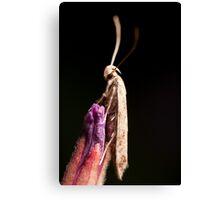 Super Moth Canvas Print