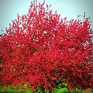 A Red Crab aplle Tree by Linda Miller Gesualdo