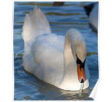 Life Stills - Swan Poster
