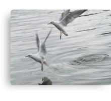 Birds taking off lake Canvas Print