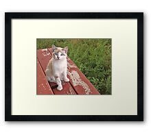 Hello Blue Eyes Framed Print