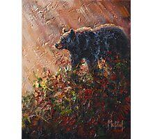 Autumn Rays-Black Bear Photographic Print