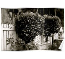 Topiary trees  Poster
