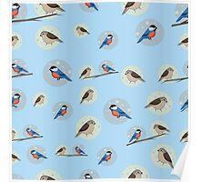 Seamless pattern of birds Poster