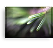 Fir tree needle Canvas Print