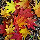 Leaves of Fall by Karen Checca