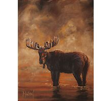 Morning Mist - Moose Photographic Print