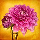 Edge of Gold Dahlia by Leslie Nicole