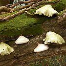 Fungi Feast by sarnia2
