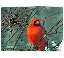 Spectacular Red Cardinal Poster