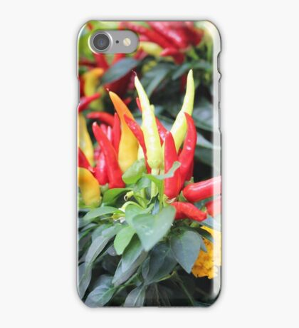 Red chili pepper  iPhone Case/Skin