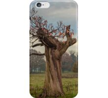 Thinning on top in the autumn years iPhone Case/Skin