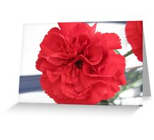 Red Carnation Flower Greeting Card