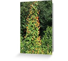Tall flower Greeting Card