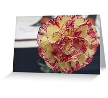 Yellow and Red Carnation Flower Greeting Card