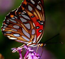 Butterfly # 11 by loiteke