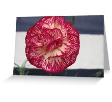 Red Pink Yellow Carnation Flower Greeting Card