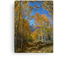 Angler Mtn Trail Canvas Print