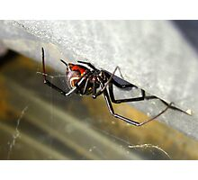 Black Widow ~ Female Photographic Print