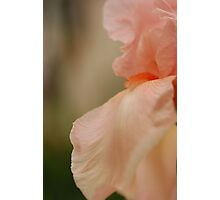 Pure Peach Photographic Print
