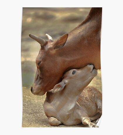 Mom & Newborn in a Blissful Moment Poster
