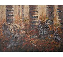 Woodland Presence - Gray Wolves Photographic Print