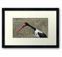 Saddlebill stork Framed Print