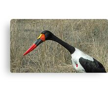 Saddlebill stork Canvas Print