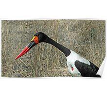 Saddlebill stork Poster
