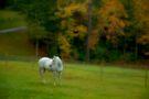 Pastel Bree by Karen Peron