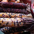 Indian Corn by May Lattanzio