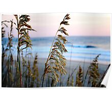 sea oats at sunrise in old Nags Head 2 Poster