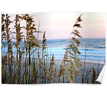 sea oats at sunrise in old Nags Head 3 Poster