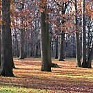 Trees of Autumn III by Mary Tomaselli