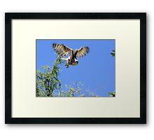 Great Horned Owl ~ Sherry's Juvenile Framed Print