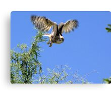 Great Horned Owl ~ Sherry's Juvenile Canvas Print