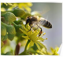 Bee @ Work Poster