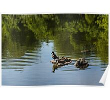 Guarding My Sleeping Family - a Mother Duck and Ducklings on the Pond Poster