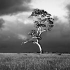Before the Storm in Monochrome by Photography1804