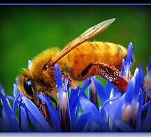 Busy Bee by AngieBanta