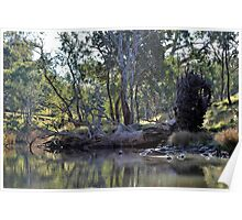 Fallen Tree at Eppalock Poster