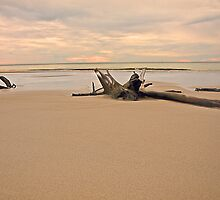 Driftwood at Cowan Cowan by GayeL Art