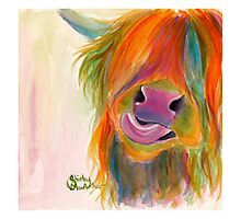 HIGHLAND COW 'JUICY FRUIT JOSIE' BY SHIRLEY MACARTHUR Photographic Print