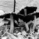 Black and white fungi by elsha