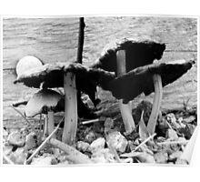 Black and white fungi Poster
